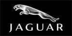 Jaguar Boomer Nashua Galleries TBA